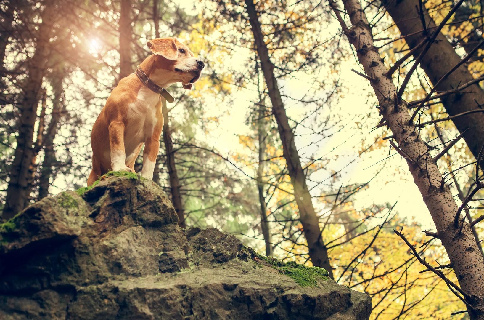 Badesee Für Hund Und Mensch