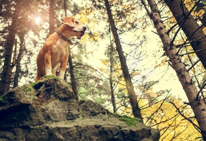Taking your dog on holiday in Bavarian Forest