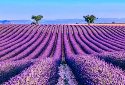 Provence - 318 Unterkünfte