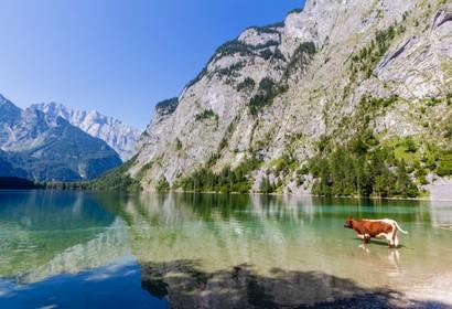 Oberbayern - 2.276 Unterkünfte