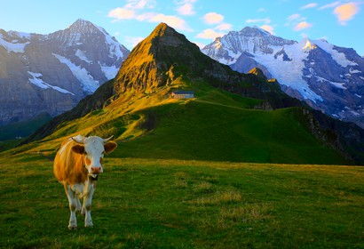 Bernese Oberland - 63 Unterkünfte